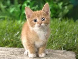 Virtual kitten